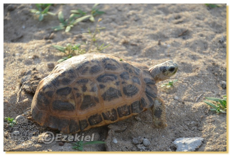 Regroupement photo: biotopes naturels & tortues sauvages  1anaka63