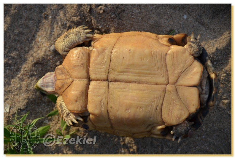 Regroupement photo: biotopes naturels & tortues sauvages  1anaka64