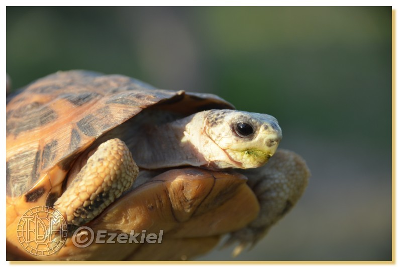Regroupement photo: biotopes naturels & tortues sauvages  1anaka66