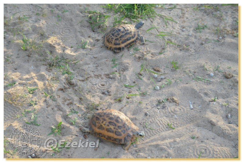 Regroupement photo: biotopes naturels & tortues sauvages  1anaka67