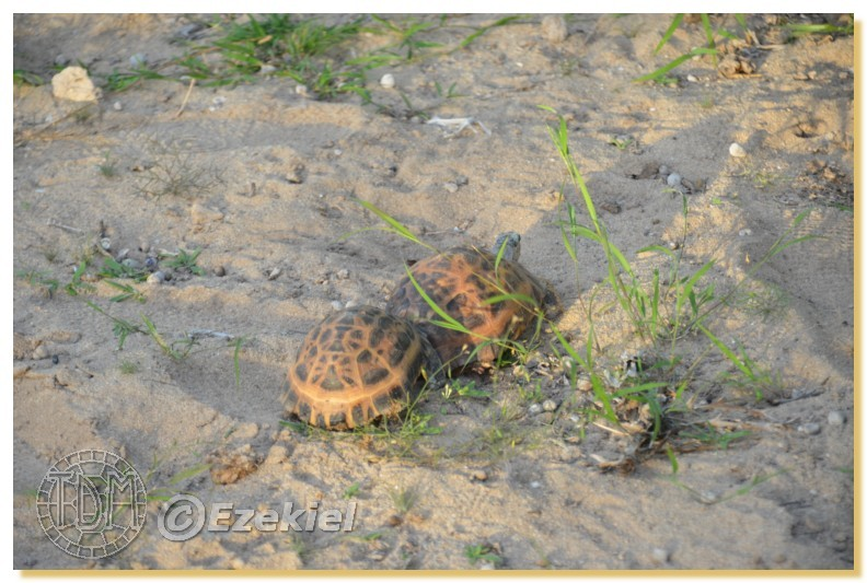 Regroupement photo: biotopes naturels & tortues sauvages  1anaka68