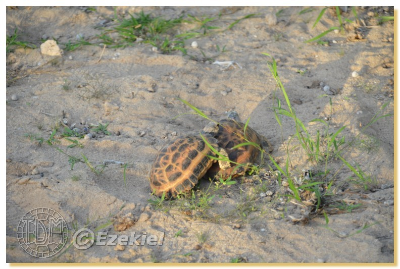 Regroupement photo: biotopes naturels & tortues sauvages  1anaka69