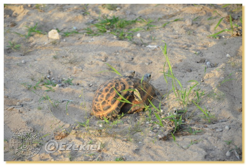 Regroupement photo: biotopes naturels & tortues sauvages  1anaka70