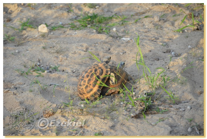 Regroupement photo: biotopes naturels & tortues sauvages  1anaka71