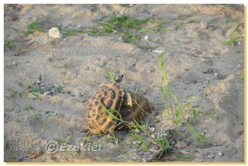Regroupement photo: biotopes naturels & tortues sauvages  1anaka72