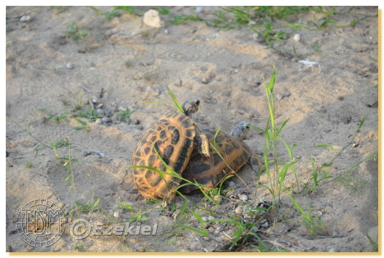 Regroupement photo: biotopes naturels & tortues sauvages  1anaka73