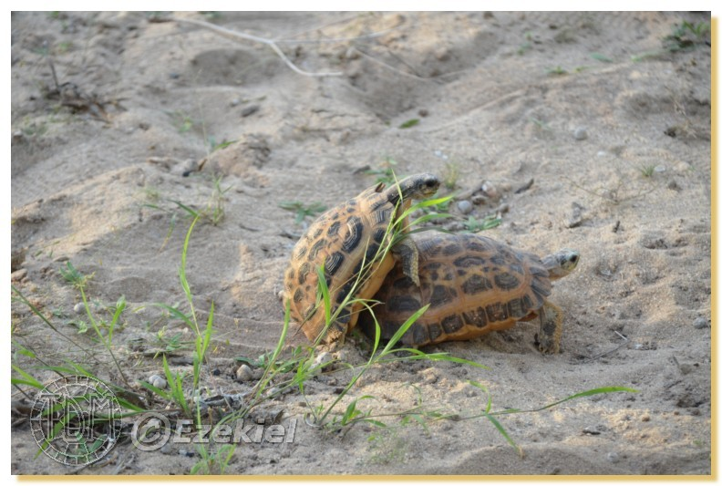 Regroupement photo: biotopes naturels & tortues sauvages  1anaka74