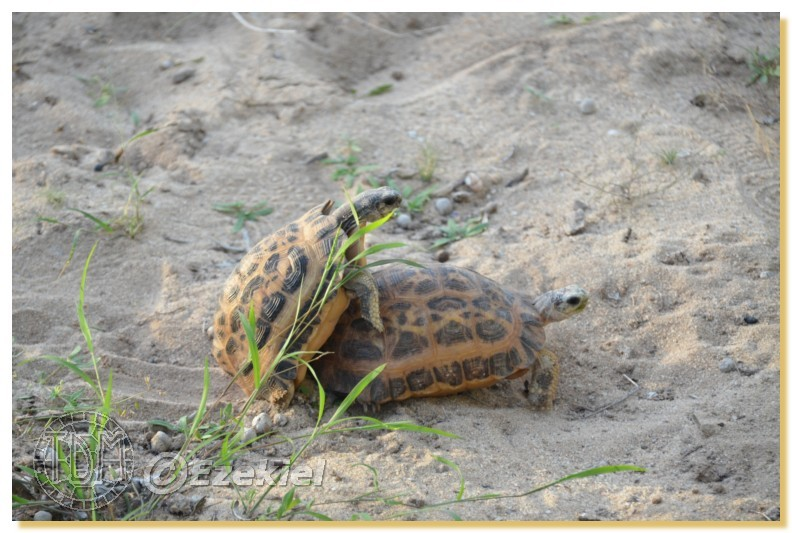 Regroupement photo: biotopes naturels & tortues sauvages  1anaka75