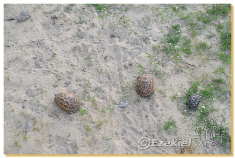 Regroupement photo: biotopes naturels & tortues sauvages  2anaka10