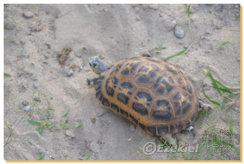 Regroupement photo: biotopes naturels & tortues sauvages  2anaka11