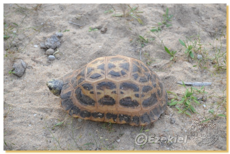 Regroupement photo: biotopes naturels & tortues sauvages  2anaka12