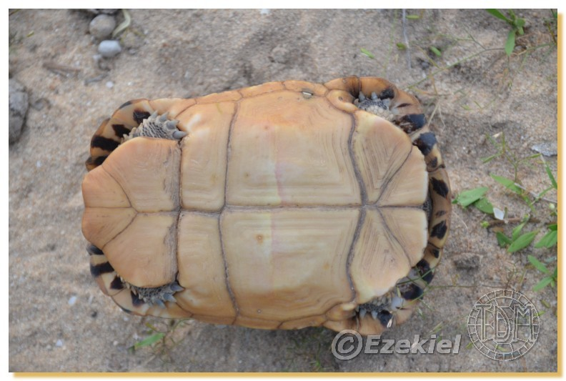 Regroupement photo: biotopes naturels & tortues sauvages  2anaka13