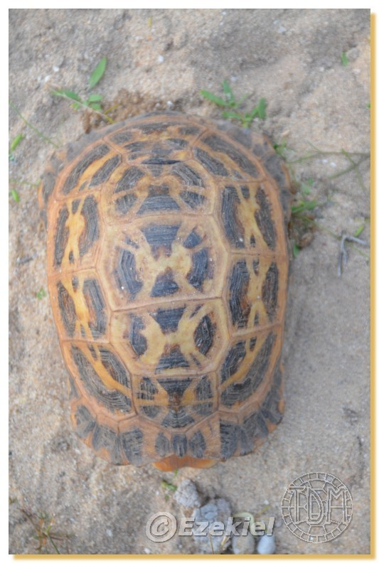 Regroupement photo: biotopes naturels & tortues sauvages  2anaka14