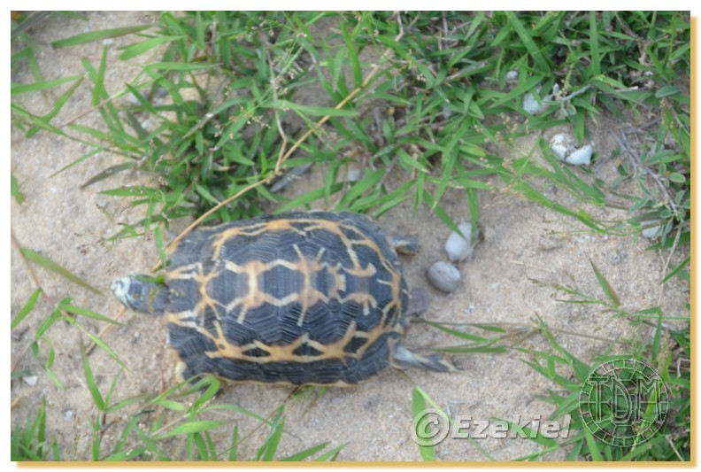 Regroupement photo: biotopes naturels & tortues sauvages  2anaka15