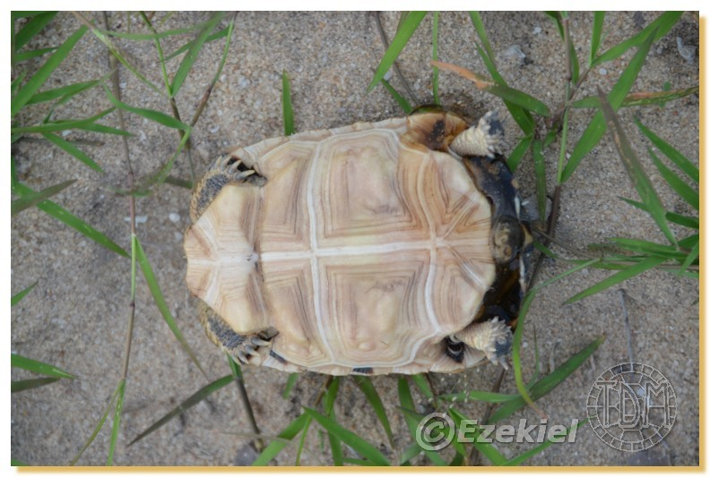 Regroupement photo: biotopes naturels & tortues sauvages  2anaka16