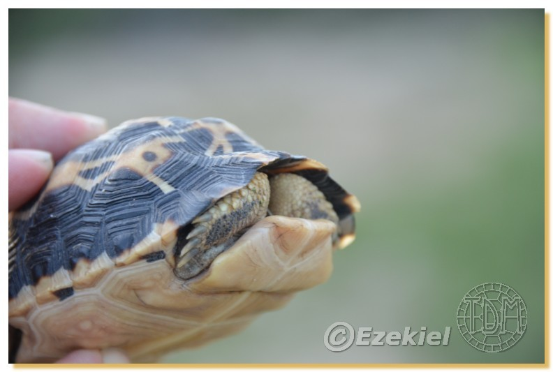 Regroupement photo: biotopes naturels & tortues sauvages  2anaka17