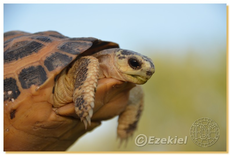 Regroupement photo: biotopes naturels & tortues sauvages  2anaka19