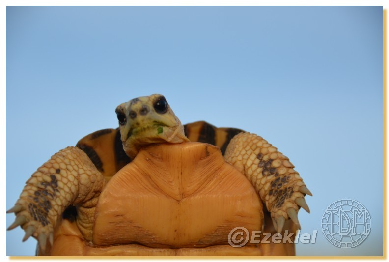 Regroupement photo: biotopes naturels & tortues sauvages  2anaka20