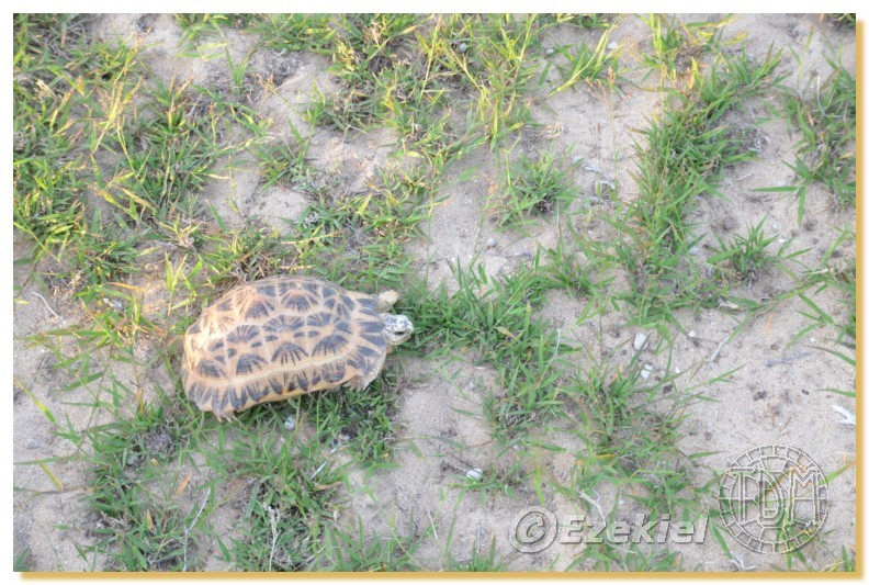 Regroupement photo: biotopes naturels & tortues sauvages  2anaka21