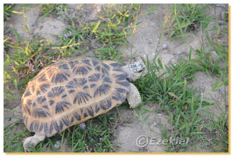 Regroupement photo: biotopes naturels & tortues sauvages  2anaka22