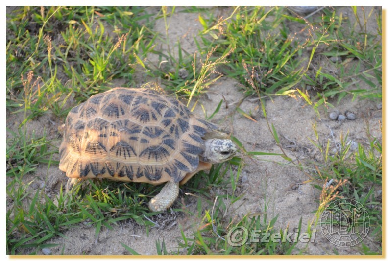 Regroupement photo: biotopes naturels & tortues sauvages  2anaka23