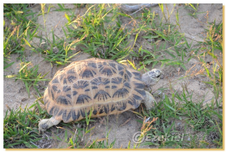 Regroupement photo: biotopes naturels & tortues sauvages  2anaka24