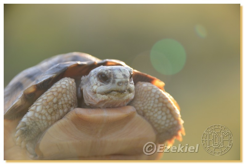 Regroupement photo: biotopes naturels & tortues sauvages  2anaka26