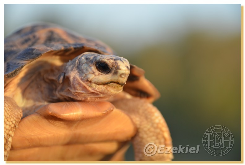 Regroupement photo: biotopes naturels & tortues sauvages  2anaka27