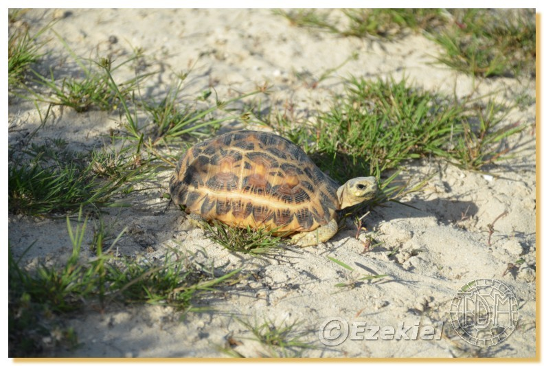 Regroupement photo: biotopes naturels & tortues sauvages  2anaka32