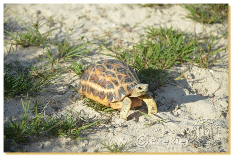 Regroupement photo: biotopes naturels & tortues sauvages  2anaka33