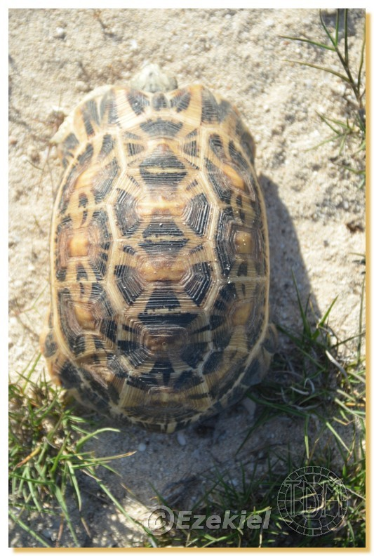 Regroupement photo: biotopes naturels & tortues sauvages  2anaka35