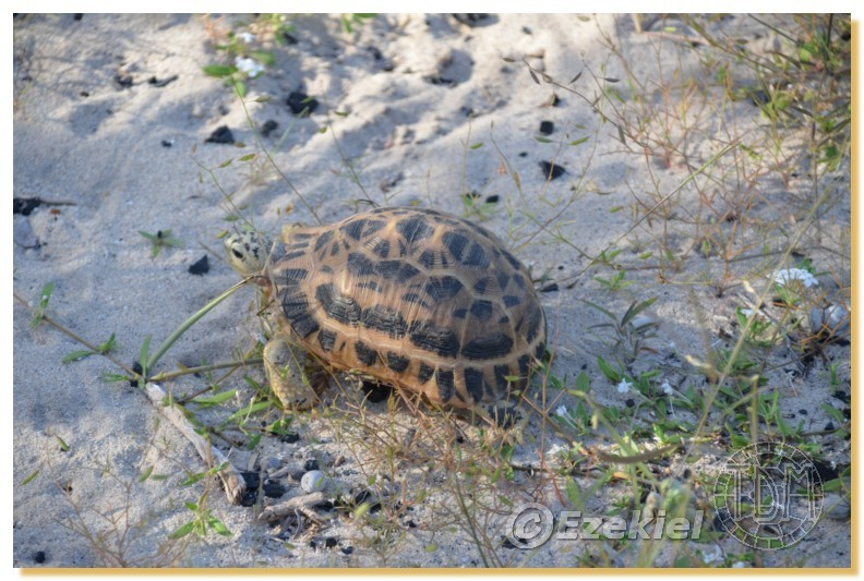 Regroupement photo: biotopes naturels & tortues sauvages  2anaka36