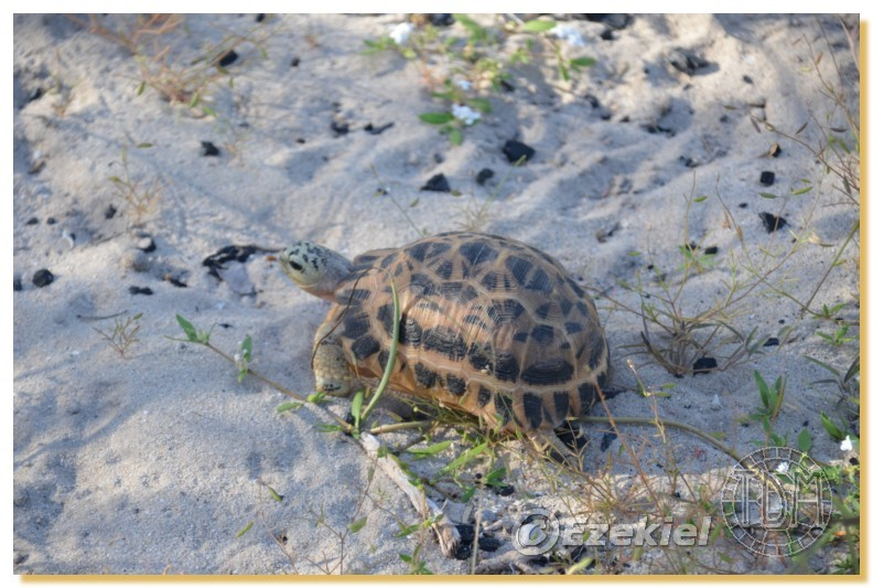 Regroupement photo: biotopes naturels & tortues sauvages  2anaka37