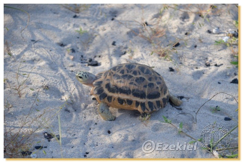 Regroupement photo: biotopes naturels & tortues sauvages  2anaka38