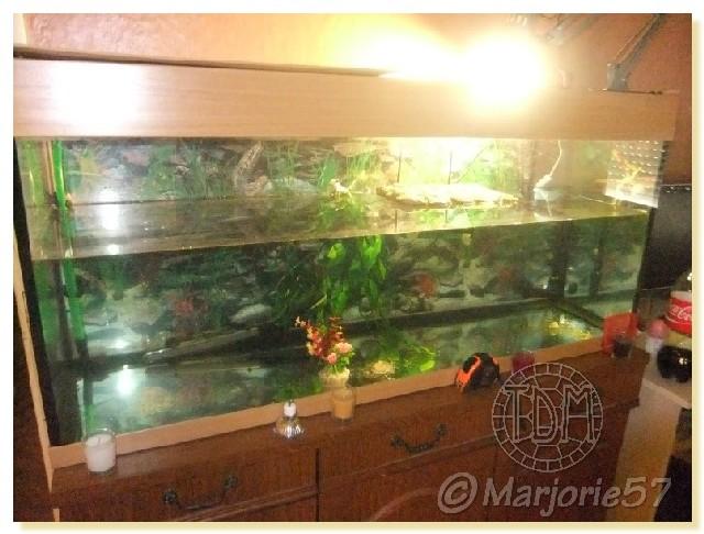 plante aquatique pour tortue d'eau