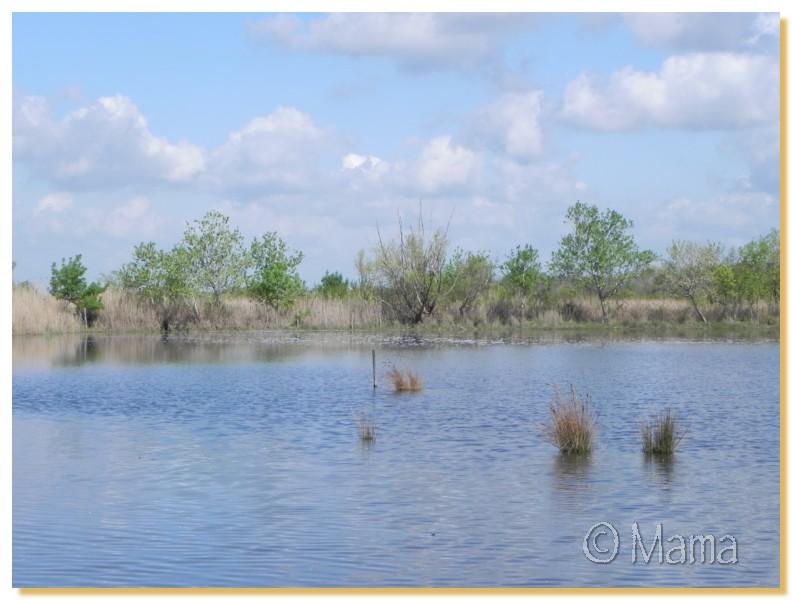La Camargue, biotope naturel et Cistudes Camarg13