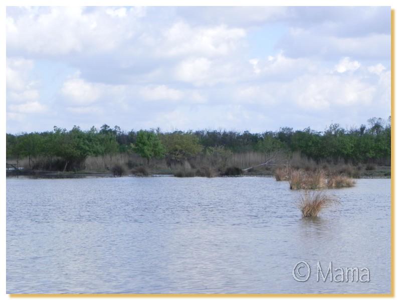 La Camargue, biotope naturel et Cistudes Camarg14
