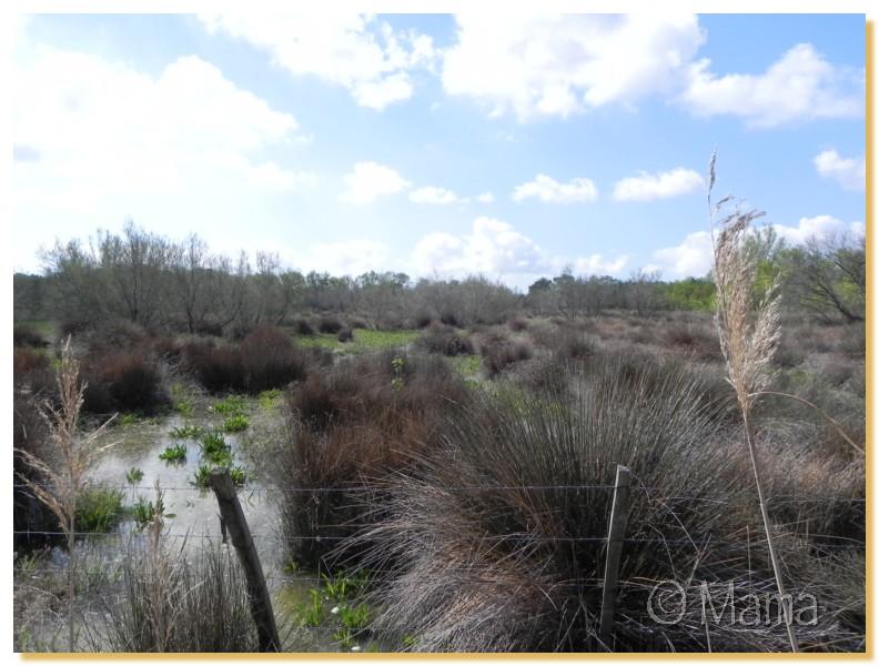 La Camargue, biotope naturel et Cistudes Camarg16