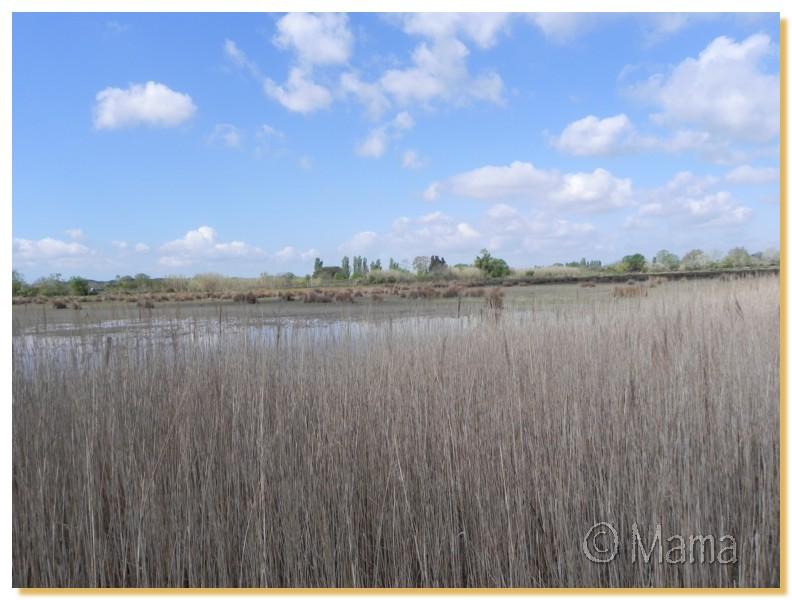 La Camargue, biotope naturel et Cistudes Camarg19