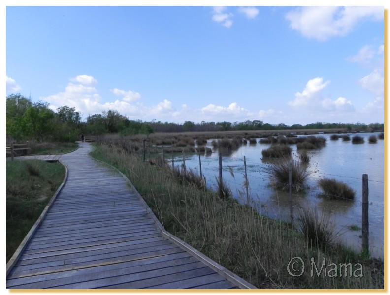 La Camargue, biotope naturel et Cistudes Camarg29