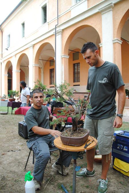 Giareda - Reggio Emilia - Pagina 3 Dsc_0616