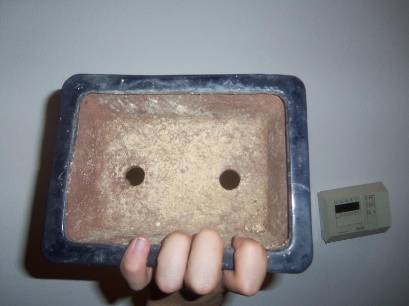 Pulizia vasi post-rinvaso/pre-mostra 100_0317
