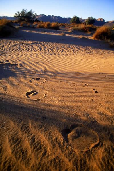 Algerian Desert (Let the pictures take) Al33210
