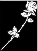 Literature of Algeria Rose_210