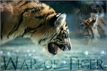 War of Tiger (RPG tigres) Wot_210
