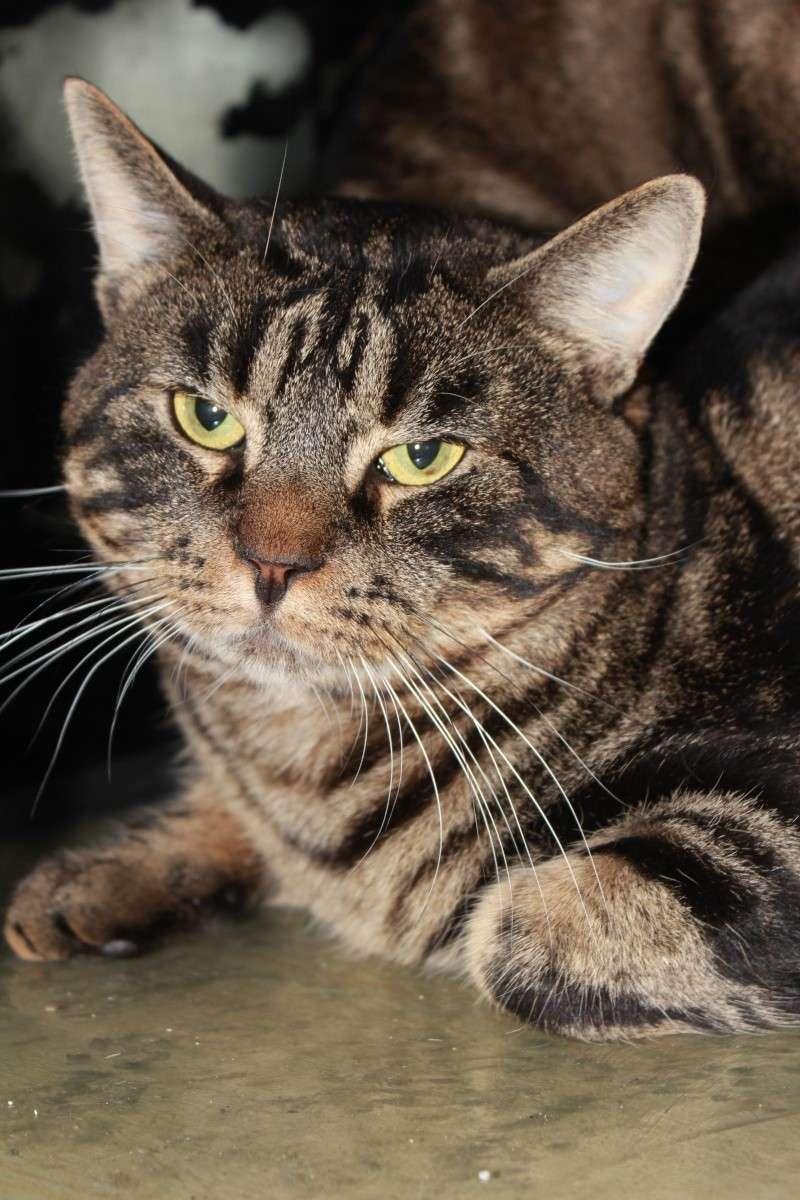 37 chats attendent toujours leur famille au refuge! ( euh non 7) Dark10