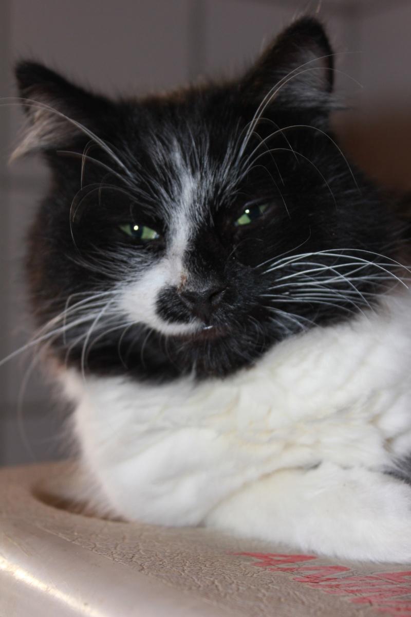 37 chats attendent toujours leur famille au refuge! ( euh non 7) Dracul11