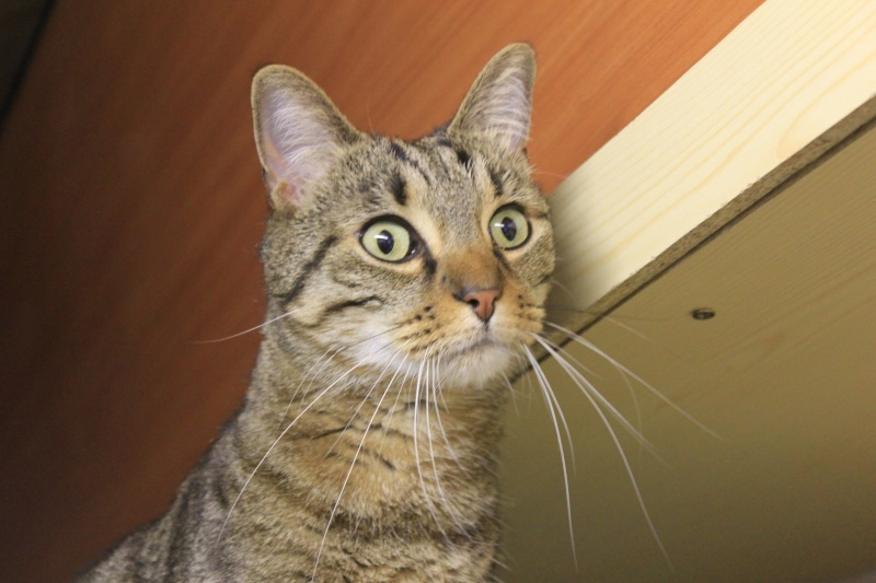 37 chats attendent toujours leur famille au refuge! ( euh non 7) Enzo10