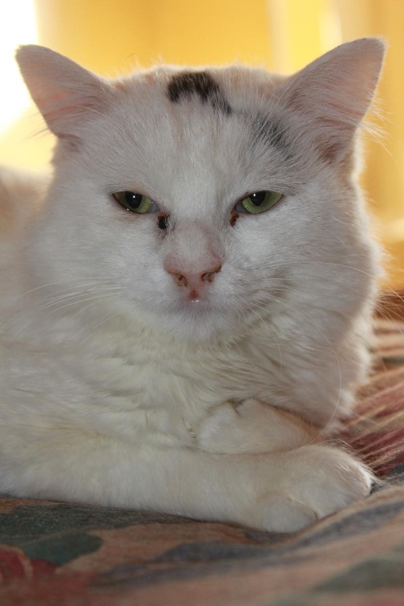 37 chats attendent toujours leur famille au refuge! ( euh non 7) Fiona12