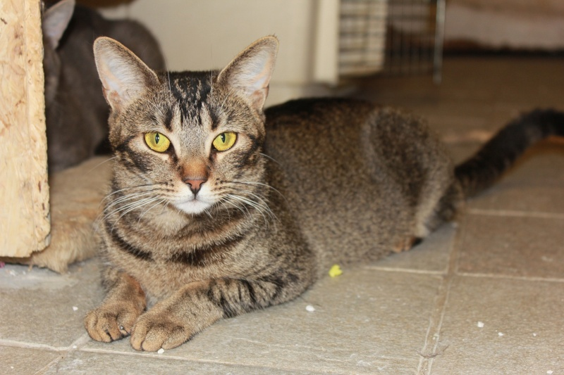 37 chats attendent toujours leur famille au refuge! ( euh non 7) Fury10